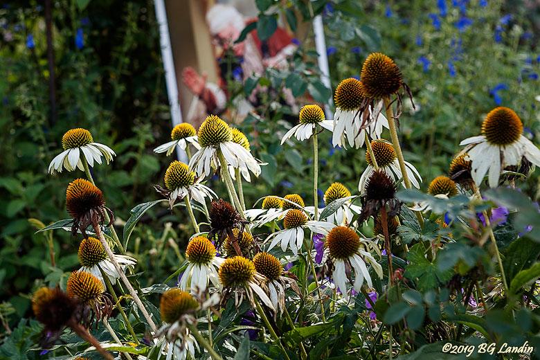 Blommor i Tomas trädgård