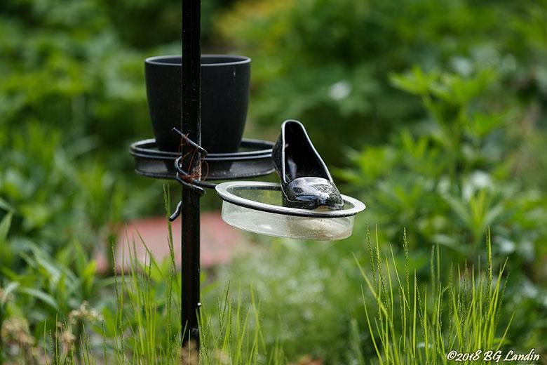 Ensam sko i trädgård