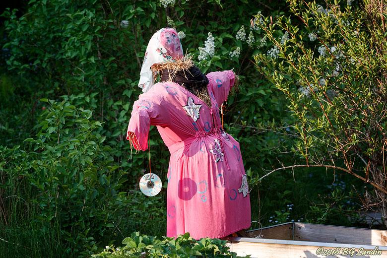 Rosa fågelskrämma
