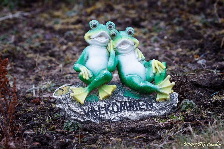 Leende gröna grodor