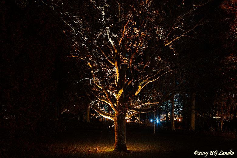 Ett lysande träd
