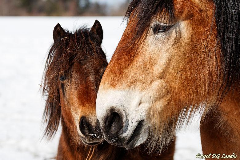Mule mot mule