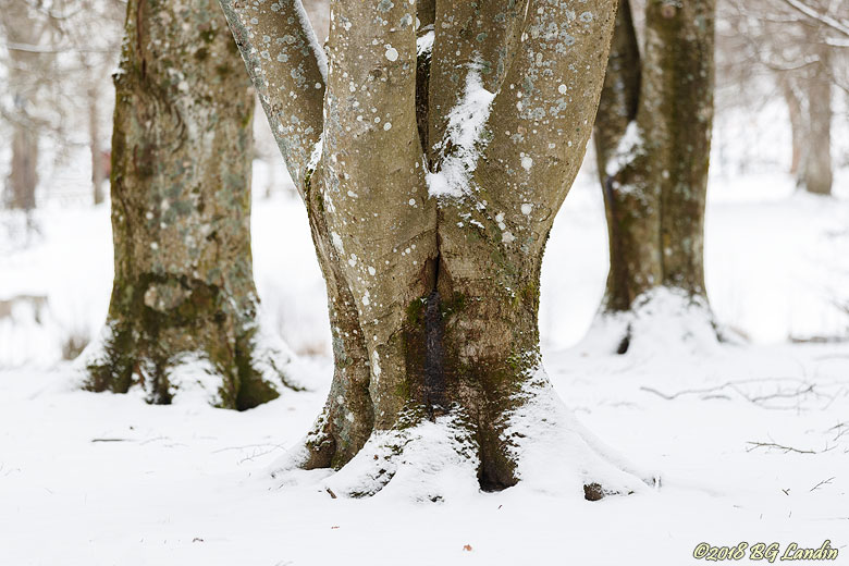 Snöig bokstam