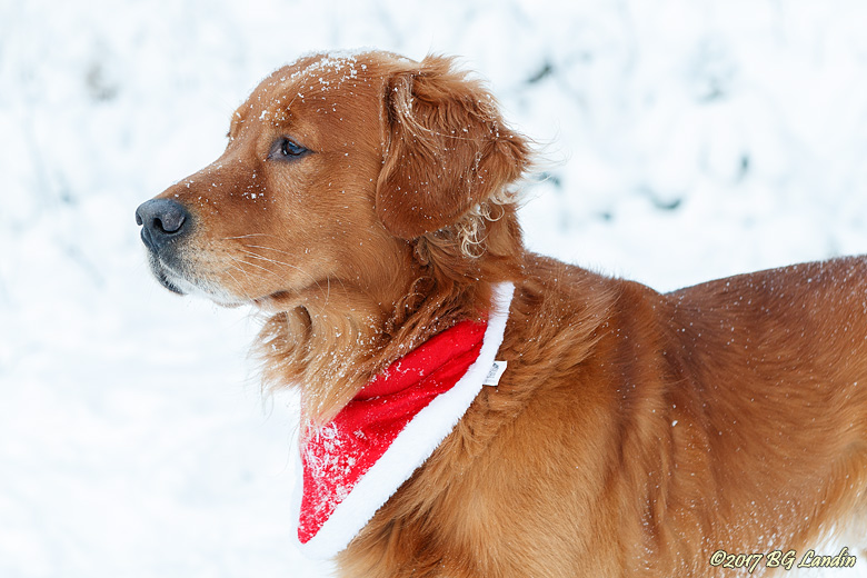 Snöig Keeperson
