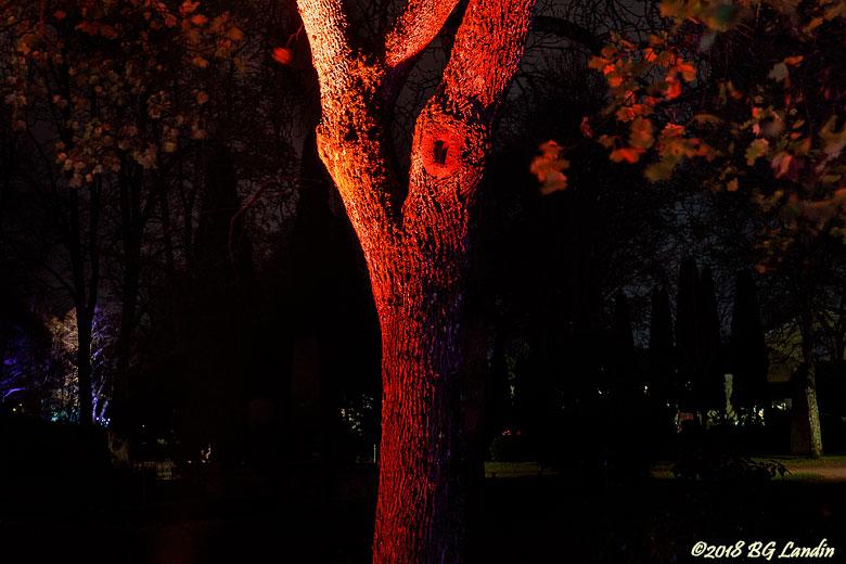 Upplyst trädstam