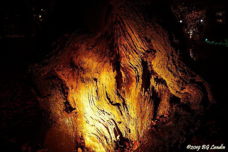 En upplyst trädstam