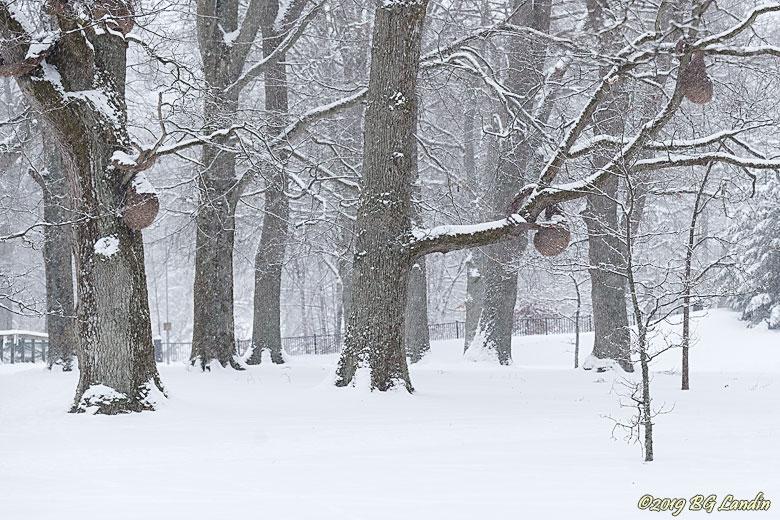 Vinter i Nolhaga park
