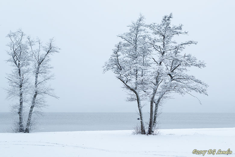 Vinterlandskap vid Mjörn