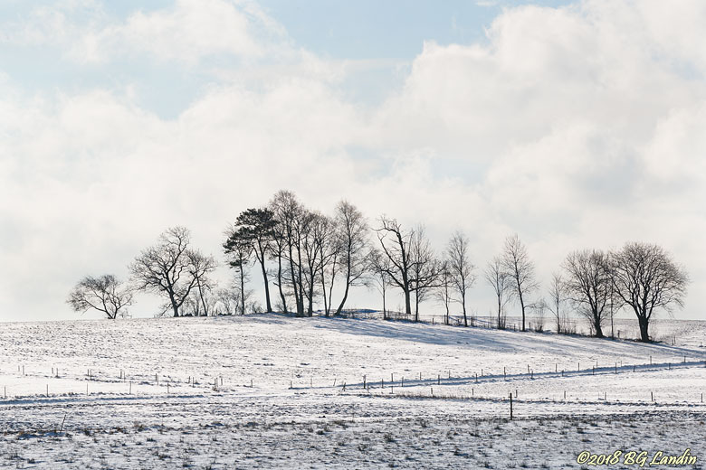 Träd i vinterlandskap