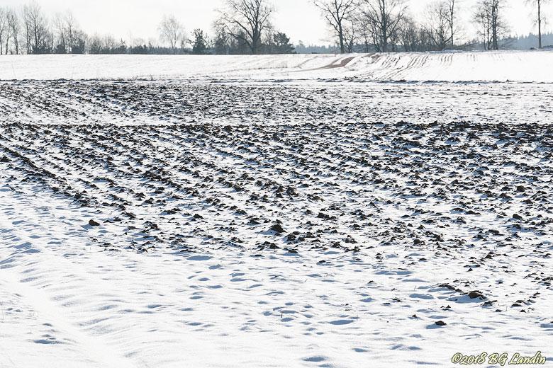 Svarta plogfåror i vit snö