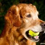 Ska vi spela tennis?