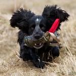 Lurviga öron med tillhörande hund