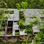 Alternativ växtlighet i växthus