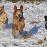 Tre amigos på språng