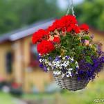 Hängande blomsterprakt