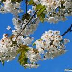 Kunskapens träd blommar