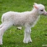 Nästan nyfödd
