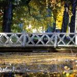 Träbro över lövtäckt vatten