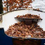 Lövfylld roddbåt