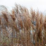Vindrufsigt gräs