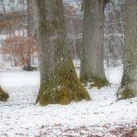 Ekstammar i vintrigt Nolhaga