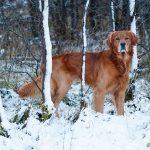 Keeperson och vinterns första snö