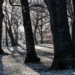 En vinterdag i Nolhaga
